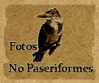 fotos no paseriformes